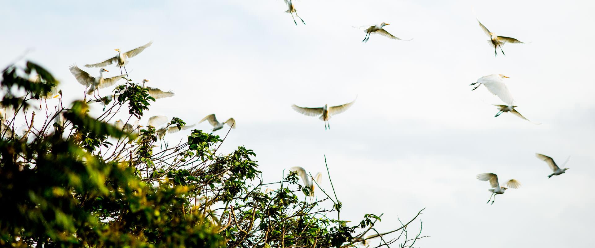 Bird Sighting
